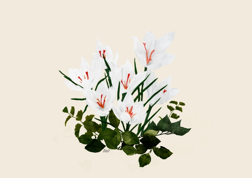 Crocus - pencil + digital painting