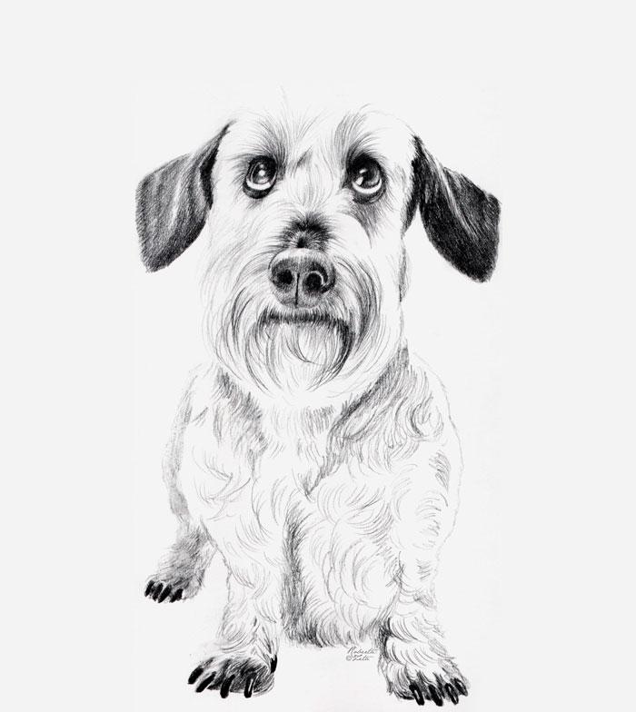 Portrait of dachshund Napoleon